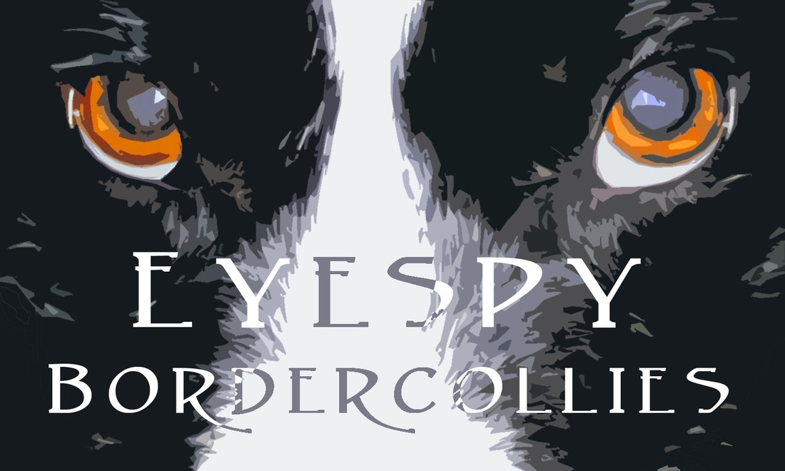 EyeSpy Border Collies